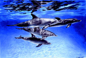 dolphins by tattoomary