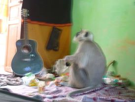 Rishikesh hari peeth ashram...playin guitar by MaRkInOiNo