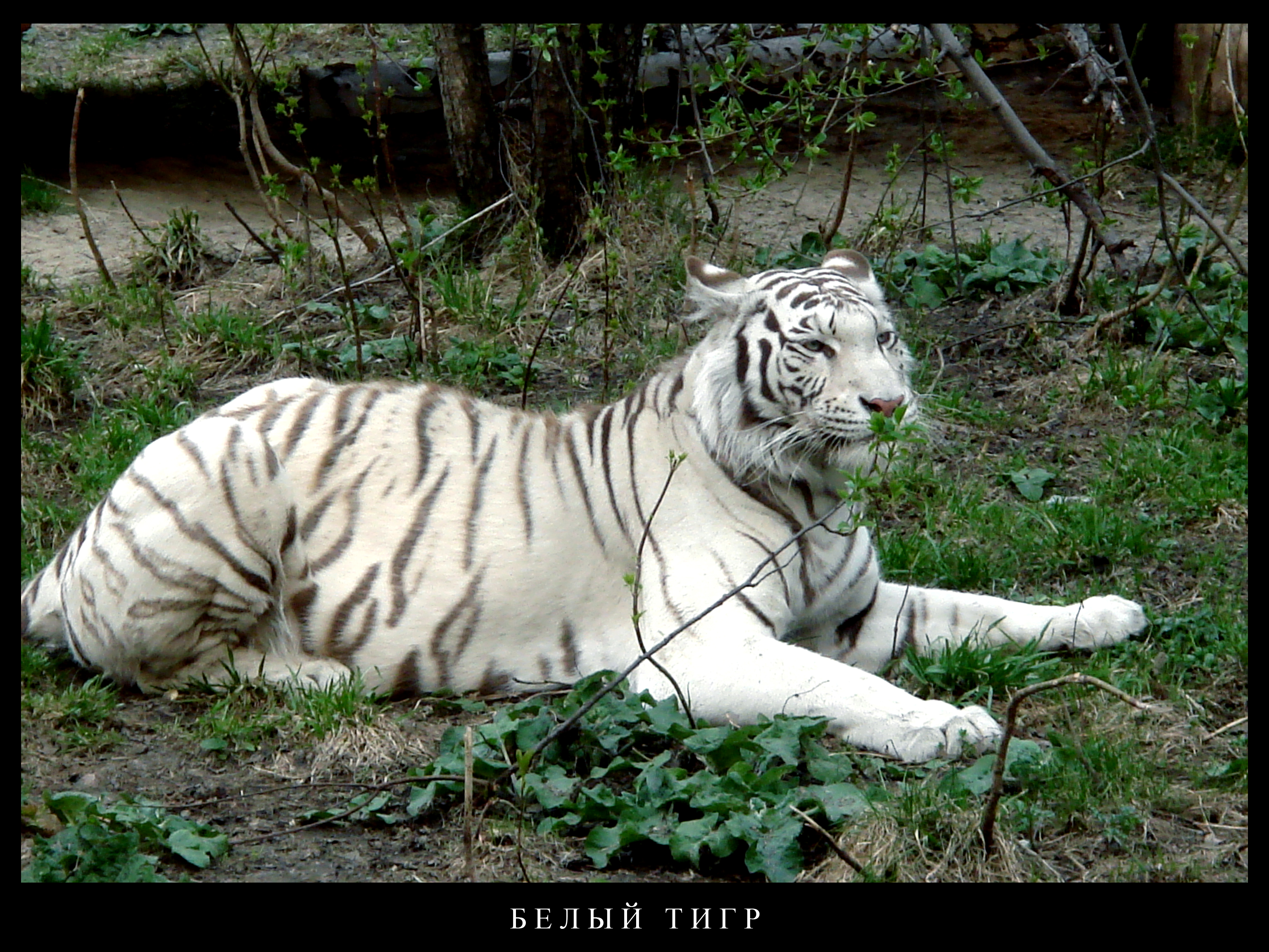 animal planet: Animal Planet Pictures