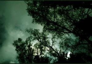 NoctiLuna's Profile Picture