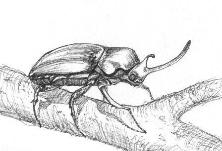 Inktober Beetle by NoctiLuna