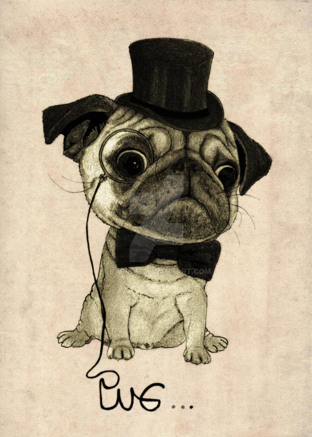 Pug (gentle pug). by barruf
