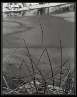 Winter Reeds by mymamiya