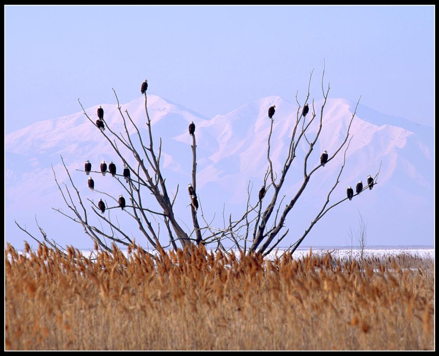 Eagle Tree by mymamiya