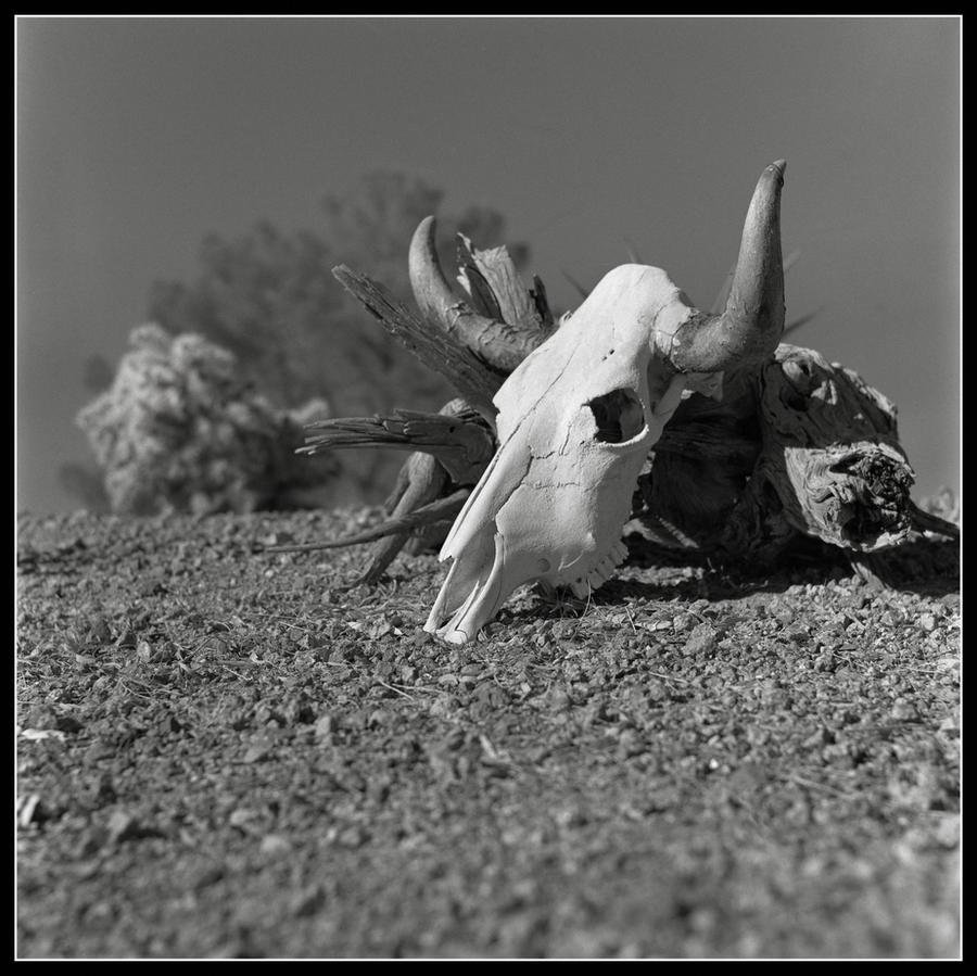 Desert Skull by mymamiya