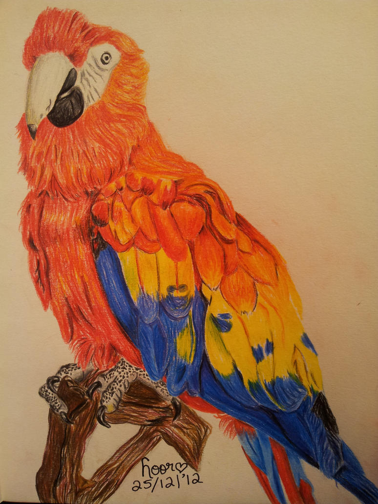 Parrot - Colour Pencils by Epic-Stuff