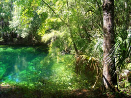Blue Springs State Park, FL 3 by TabithaS-Photography