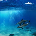 A-pair-of-dolphins-playing-in-sunrays-underwater-2