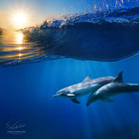Two beautiful dolphins under wave