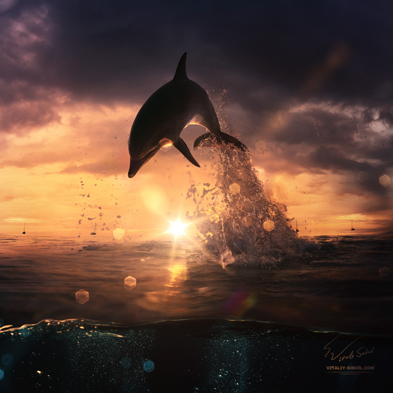 Beautiful Sunset Dolphin Jumping From Ocean By Vitaly Sokol