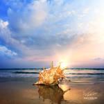 Seashell Lambis Truncata by Vitaly-Sokol