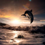 Beautiful sunset and dolphin leaping out