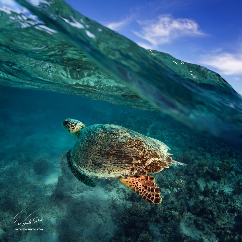 Big Green in The Sea by Vitaly-Sokol