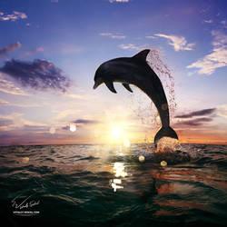 Beautiful-sunset-dolphin-jumping-130814