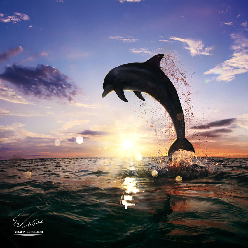Beautiful-sunset-dolphin-jumping-130814 by Vitaly-Sokol on ...