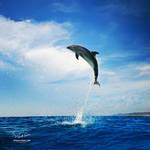 Dolphin by Vitaly-Sokol