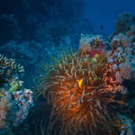 Colors Of Red Sea