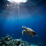 turtle-2N9A7786