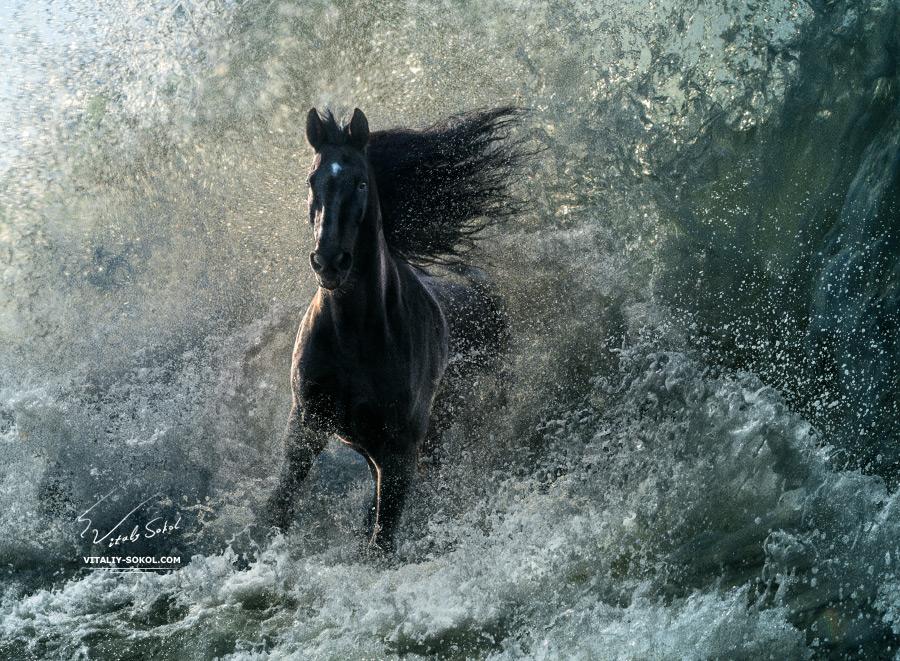 Storm by Vitaly-Sokol