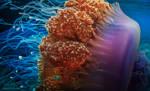 jellyfish-2N9A9723