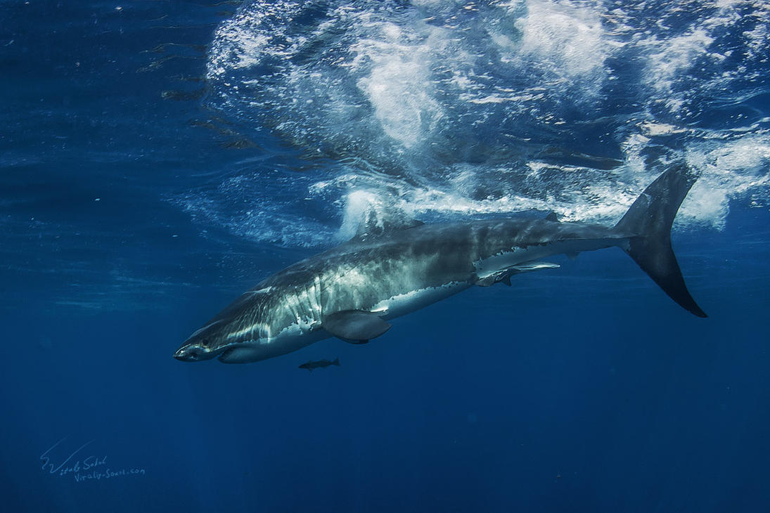 The King of The Ocean by Vitaly-Sokol