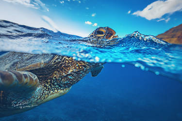Turtle by Vitaly-Sokol