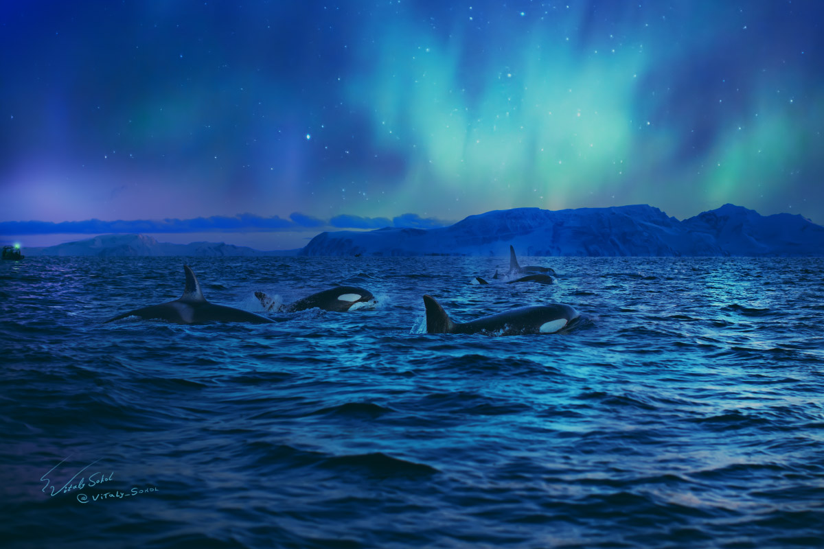 The Land of Orcas and Amazing Backgrounds