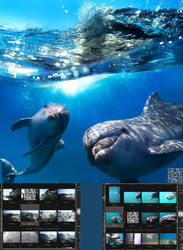 My Most popular PHOTO of Dolphins in WEB