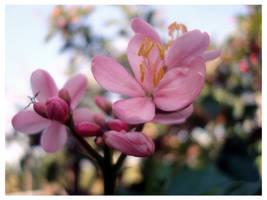 Pink Flower by littlestdamnthings