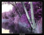 Violet plants 1