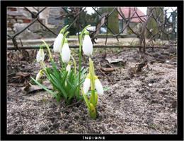 Springtime 1