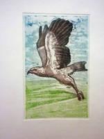 Aguila by YamTorresIlustrador