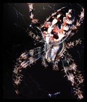 Itsy Bitsy Arachnophobia