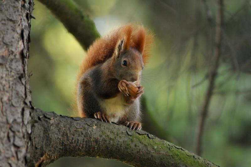 Squirlie II by DooMourneR
