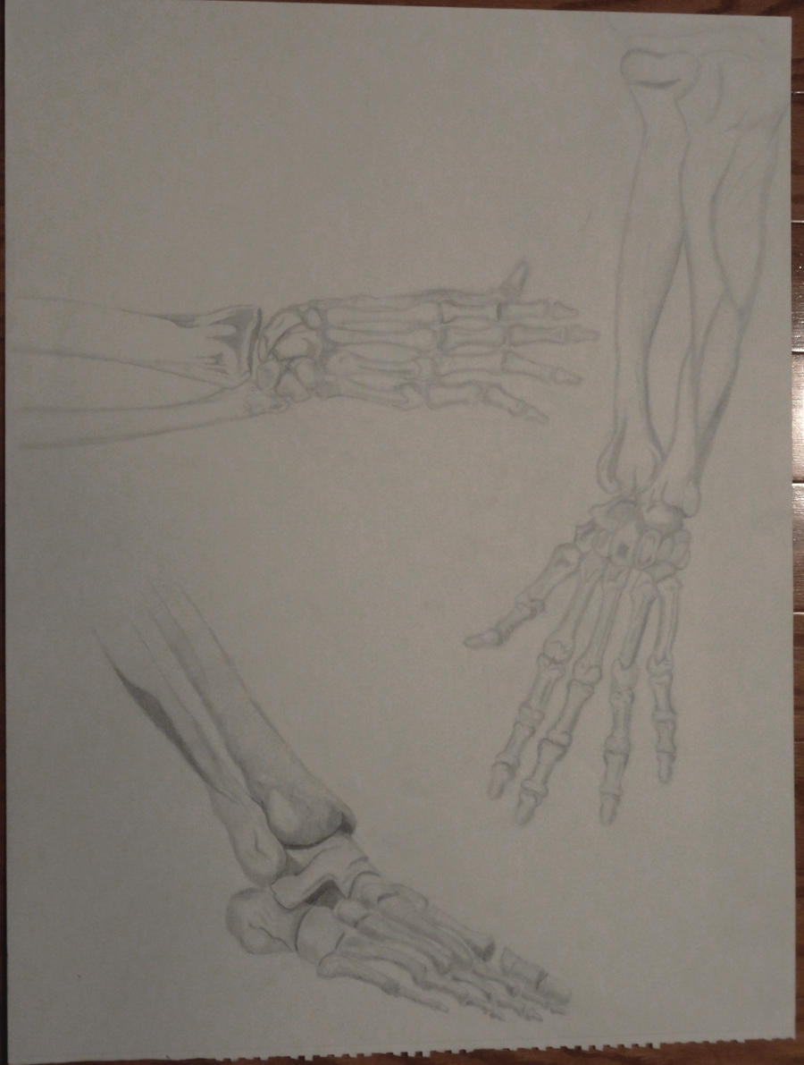 Drawing II College class for Spring 2012 Bones by ENT2PRI9SE