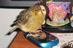 Your mobile phone is mine!!! (Pajarito)