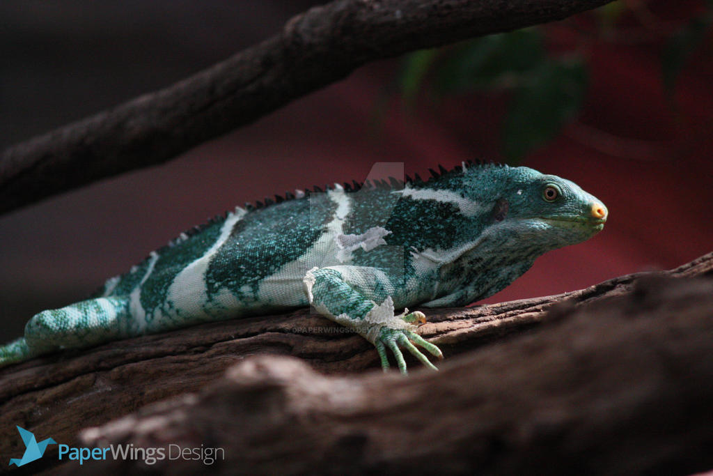 IMG_5422 - Fijian Crested Iguana by 0paperwings0
