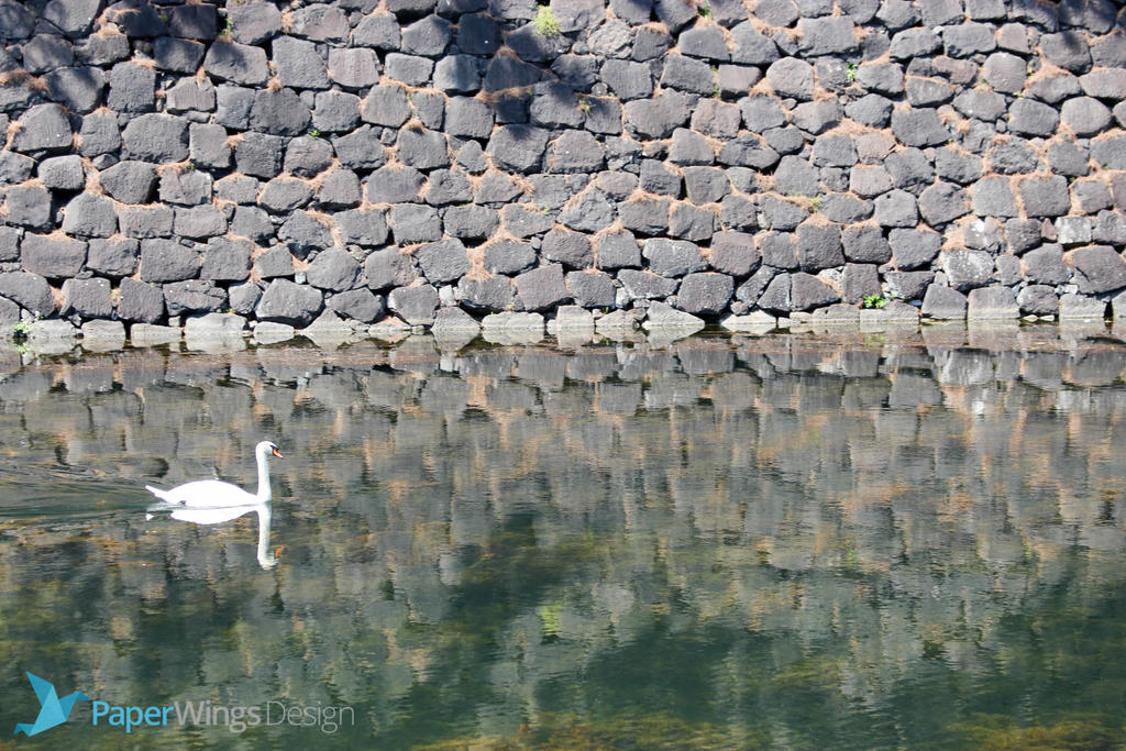 IMG_0327 - Swan by 0paperwings0