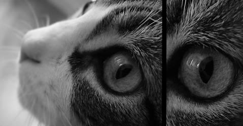 Depth of eyes by I-Iron