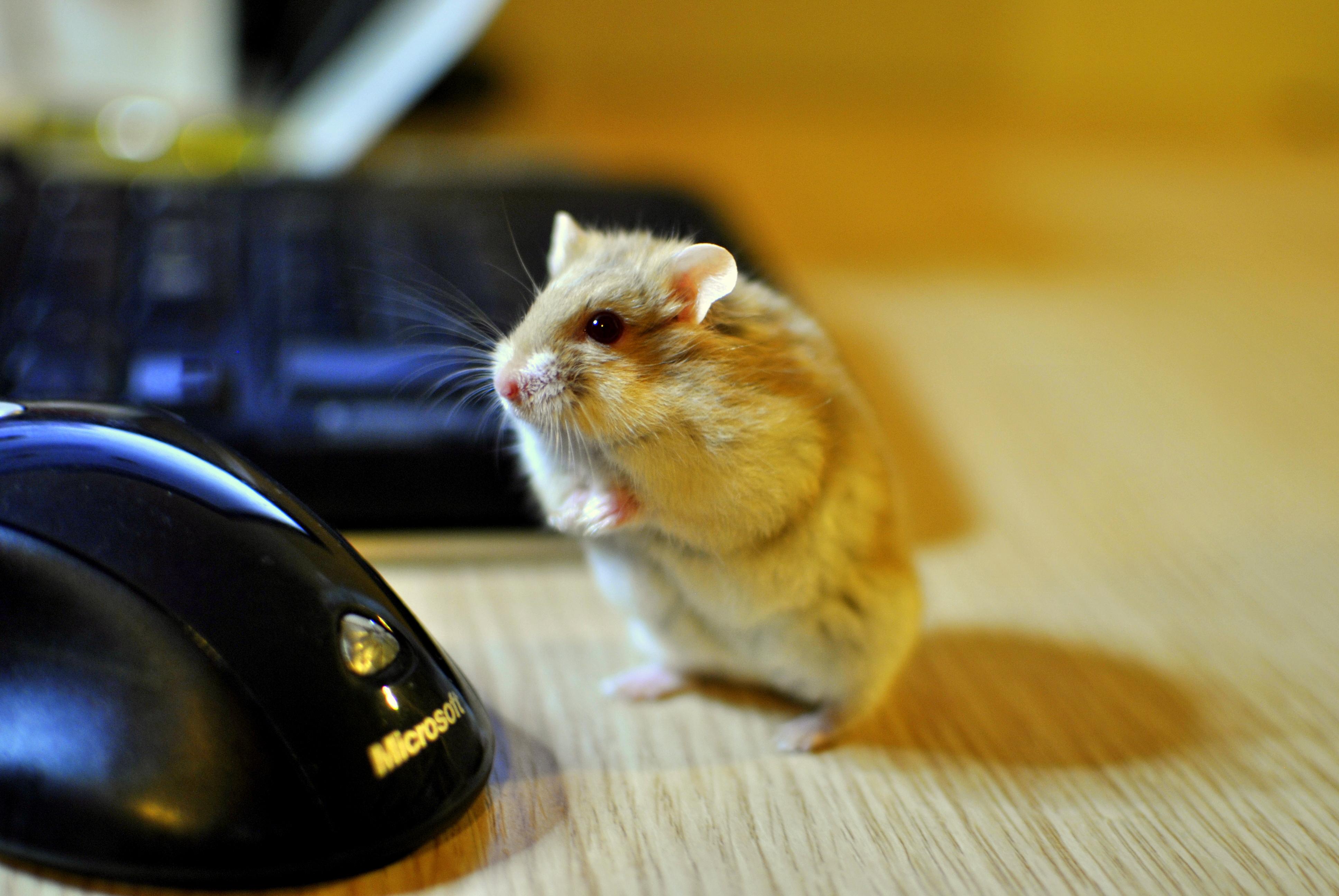 Hamster by MelihERSAHiN