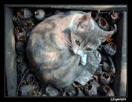 cat.. by LegioInferi