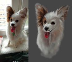 My dog #2 - Alba