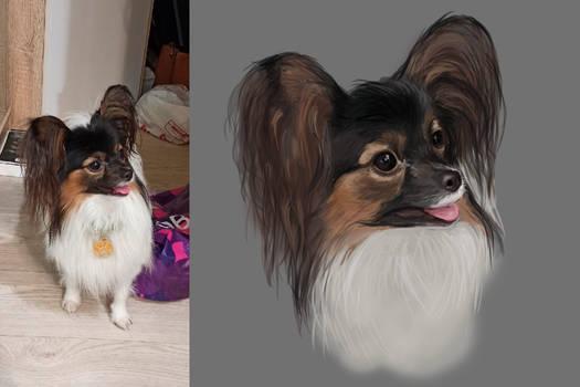 My dog #1 - 2 - Watson
