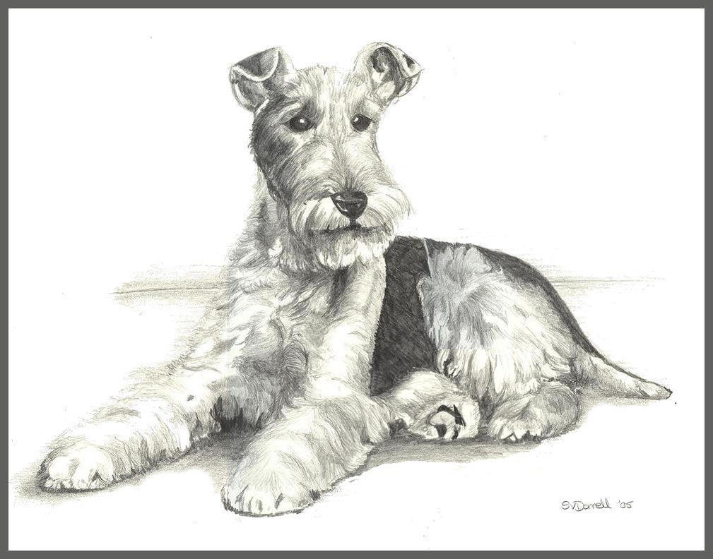 Fox Terrier by d3javu3 on DeviantArt