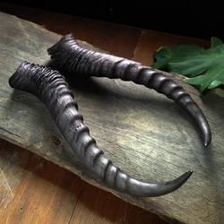 Replica Springbok Horns by Elorhan