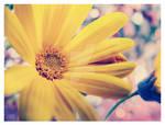 YellowFlower by ThErEaLDoLLyFrikka