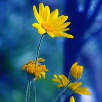 yellow.in.blue by ThErEaLDoLLyFrikka