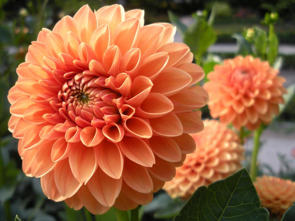 Orange Flower by TorrenKlaimer on DeviantArt