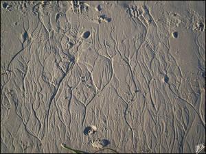 The Tree Sand