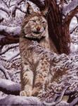 Cross Stitch Siberian Lynx